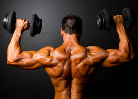 Muskelaufbau durch Proteine